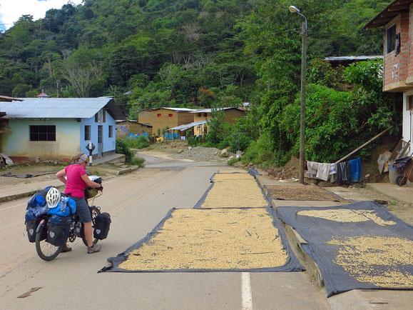 Kaffeebohnen trocknen auf der Strasse. Bei so wenig Verkehr kein Problem.