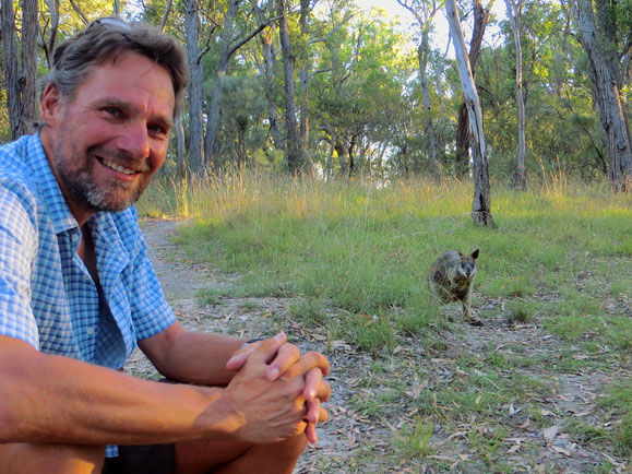Das Wallaby bleibt den ganzen Abend in unserer Nähe.