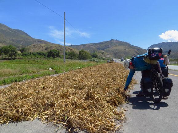 Bauern trocknen Bohnen auf einer abgesperrten Strasse.