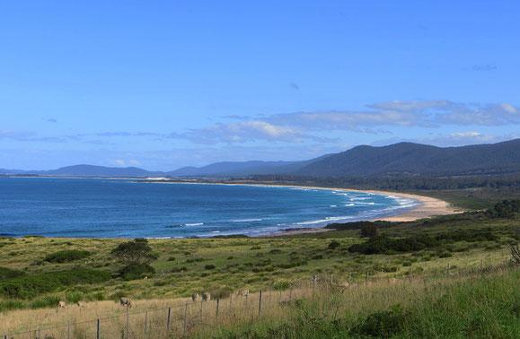 In Tasmanien gibt es unglaublich weite Strände, und das Tollste ist, sie sind meistens menschenleer.