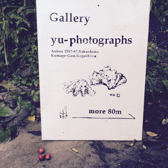 yu-photographs,yakushima,Gallery