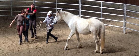 El trabajo en libertad es una manera excelente de establecer una comunicación con el caballo, sin necesidad de recurrir a la fuerza física para obtener un complejo control sobre el caballo.