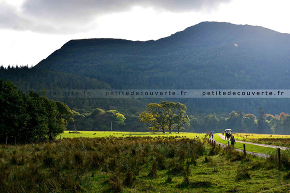 - Parc National de Killarney -