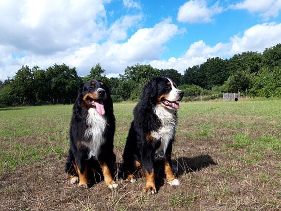 Brüder vom Rönnbaum - Legolas-Ludwig (links) und Lord-Leo (rechts)