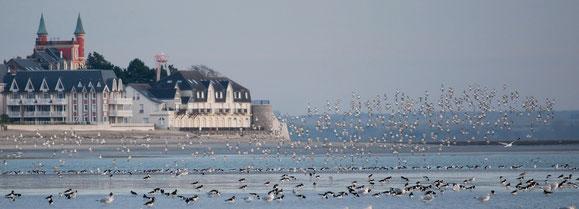 Oiseaux, baie de Somme, le Crotoy, Jean-Michel Lecat