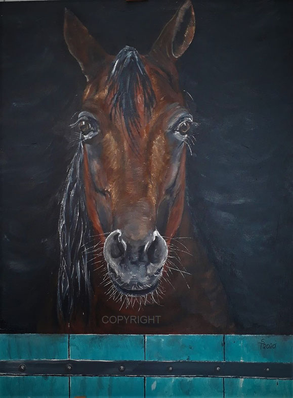 Pferdeporträt (Kopf und Teil des Körpers) eines braunen Pferdes. Dabei schaut des Pferd direkt den Betrachter an