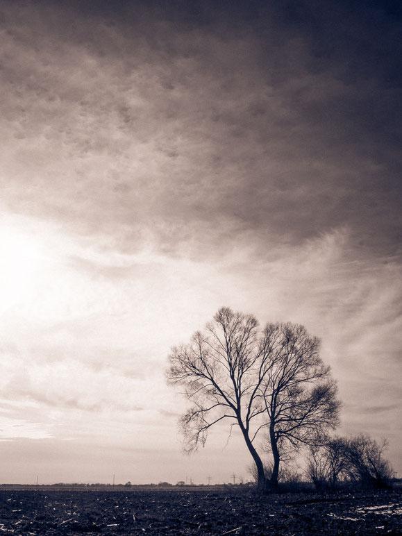 Düstere leere Bäume