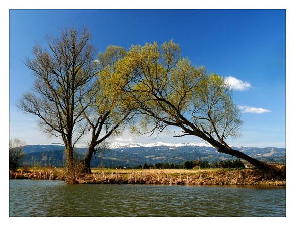Der Rattenberger Teich Ende März, im HG die Seetaler Alpen