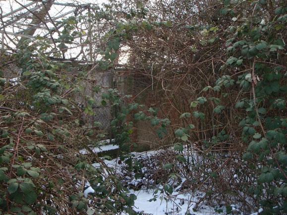 Verwunschen- der Eingang zum Im Othfelde 2012