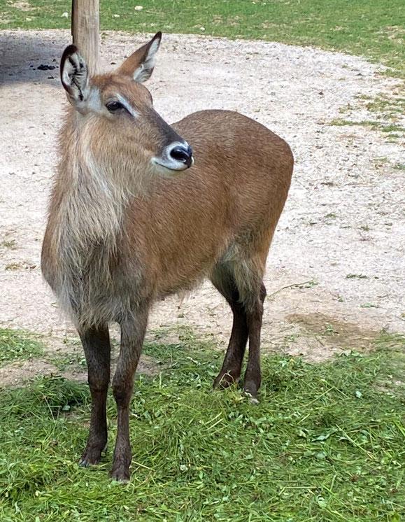 Dvůr Králové safario parko viena svarbiausių misijų – apsaugoti nykstančias laukinės gamtos rūšis