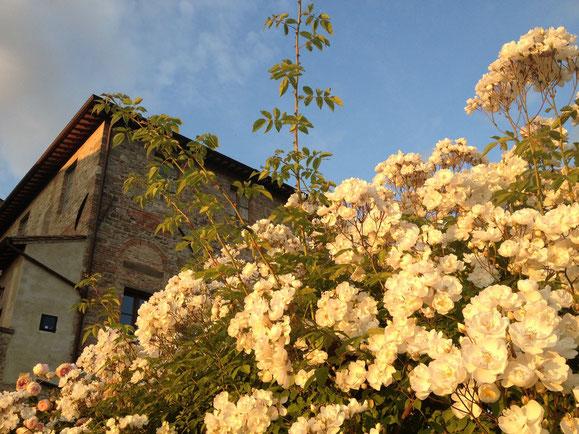 essenza di rosa in giardino!