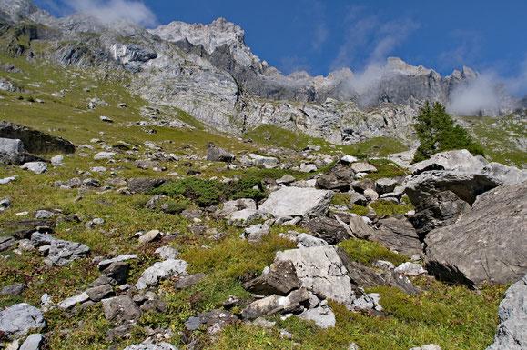 Lebensraum von Bergeidechse und Kreuzotter im Berner Oberland