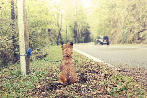 L'abandon d'un animal est un acte devenu tristement banal