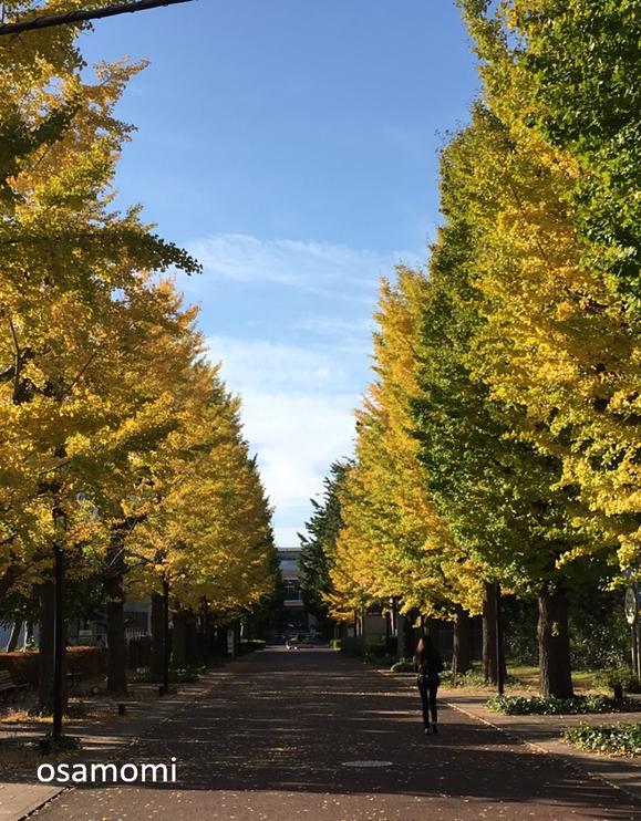 オサモミ整体院 ウォーキング教室 昭島市いちょう並木