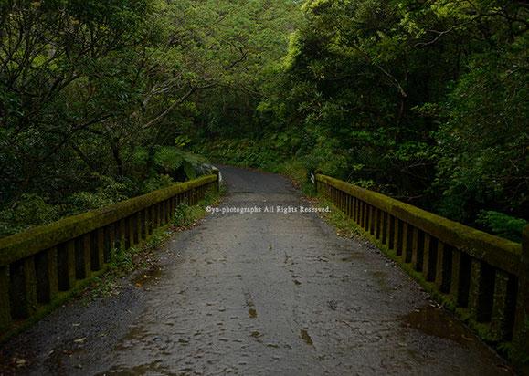雨の橋 yu-photographs