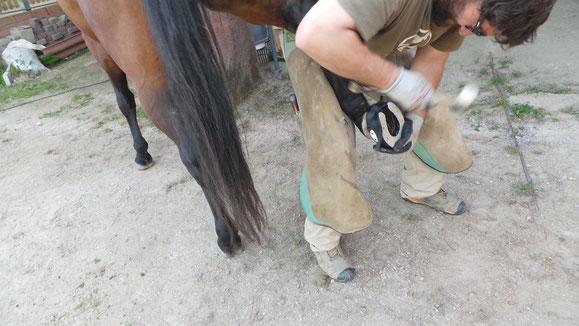 Foto: Marc Sánchez i Carbó - Barefoot - adaptando una bota al casco del caballo