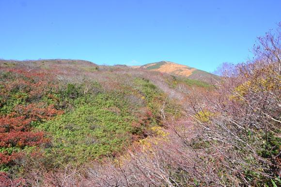 登り始めておおよそ1時間で尾根に出る。そこで初めて栗駒山の頂を見た。         残念!! 紅葉は終わっていました。