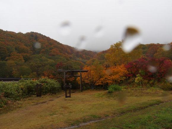 酸ヶ湯登山口の紅葉(10月6日撮影)                                      もともとこの日が八甲田山山歩きを計画していた。台風の影響の雨でロープウェイも運休。それで山歩きは順延し6日は青森観光でした
