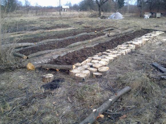 我們的第一批菜圃