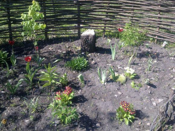 我們第一批的花圃之一