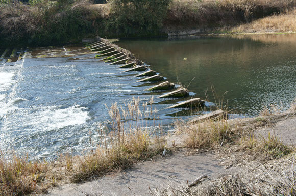 川原園井堰。この時期は真ん中よりも奥側半分だけ堰き止められている