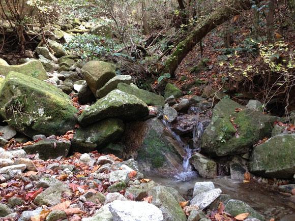 甫与志岳中腹の石清水。ここを高山川の源流ということにしました。