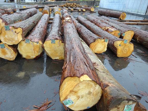 加子母森林組合原木市場