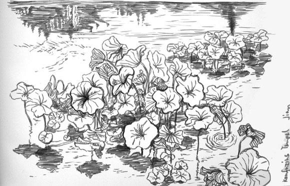 Lotuspflanzen im Konfuziuspark, Jianshui