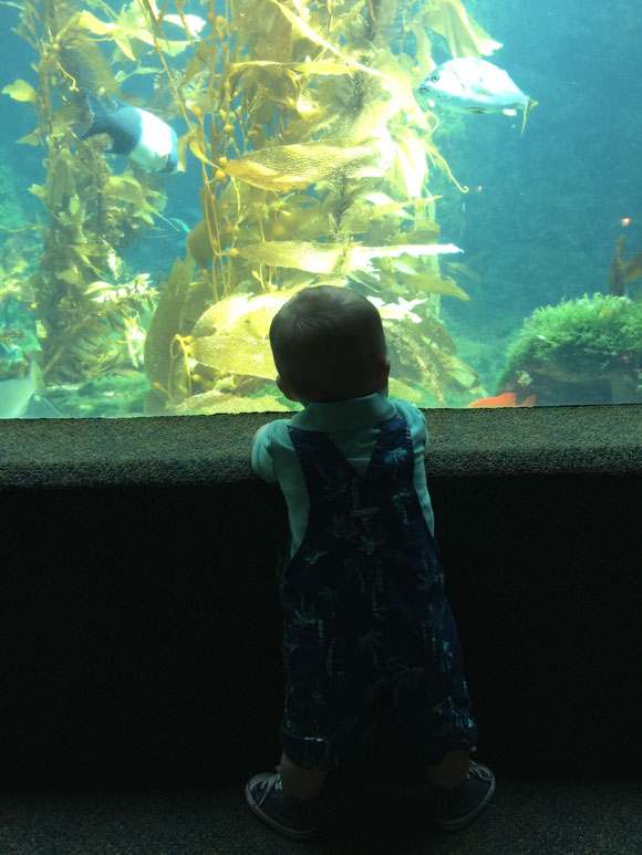 Birch Aquarium in La Jolla with Baby