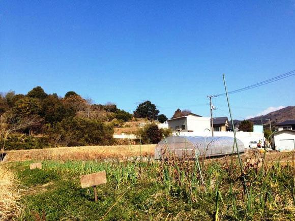 むかしやさいの貸農園(ファームシェア)平成26年2月