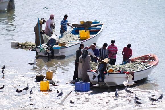 mit den heutigen modernen Booten incl. Außenborder läßt sich viel leichter fischen. Das finden nicht nur die Menschen, sondern auch die Möven ....