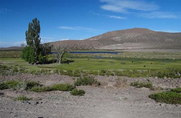der Asphalt hat uns wieder und versorgt 2 grüne Oasen mit ihren Bewohnern an den unwirklich blau erscheinenden Seen
