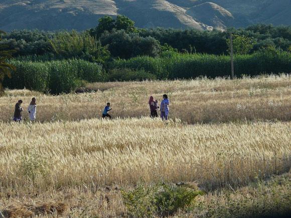 Getreideanbau in der Ebene.