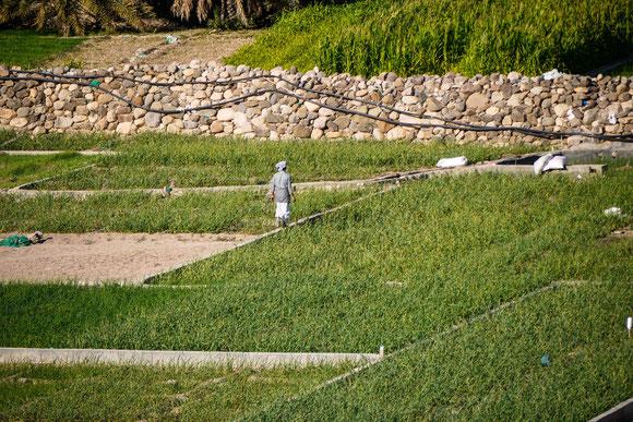 aber ihre Gärten werden immer noch nach alter Art in Handarbeit und mit den alten Bewässerungssystemen bearbeitet.