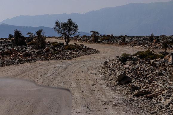 Was war zuerst da: der Baum oder der Weg ??? ;-)