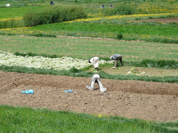 Agoudal, wo Wasser fließt, wird Landwirtschaft betrieben.