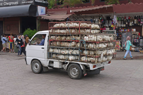 Eiliger Frischfleischtransport