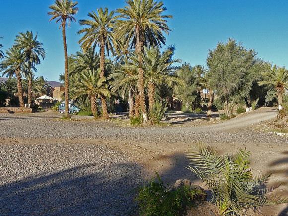 Der Campingplatz auf dem Gelände der Kasbah ist von Palmen beschattet