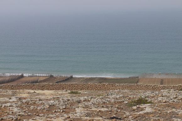 Landwirtschaft direkt am Meer zwischen Safi und El Jadida