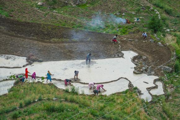 Reisterrassen auf über 2000 Meter Höhe.