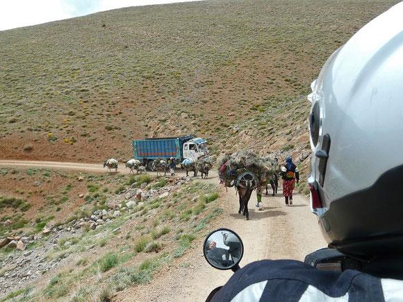 Rushhour und keine Chance zum Durchkommen. Was sind doch da wieder Esel unterwegs...