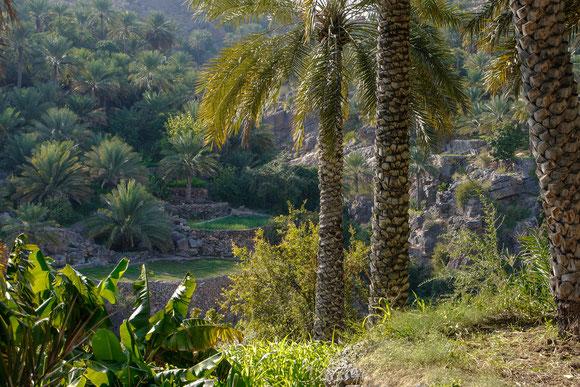 unten im Tal ist es schattiger, deshalb ist Anbau auch ohne Palmen darüber möglich.