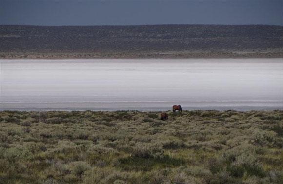 zwischendurch ein kleiner Salar mit patagoniengemäßer Fauna