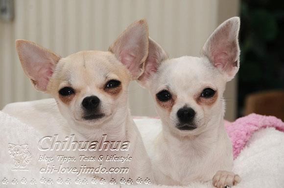 Mit einem Klick auf das Foto könnt ihr Lilly & Goofy auf ihrer Facebook-Seite besuchen