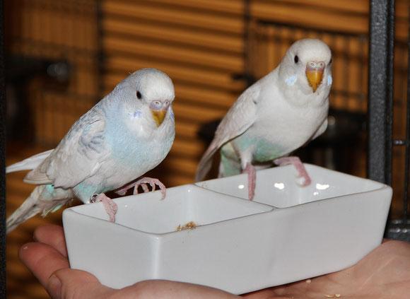 Gucchi links (6 Jahre alt)-Bella rechts (3 Jahre alt)-meine zwei Jüngsten im Schwarm.