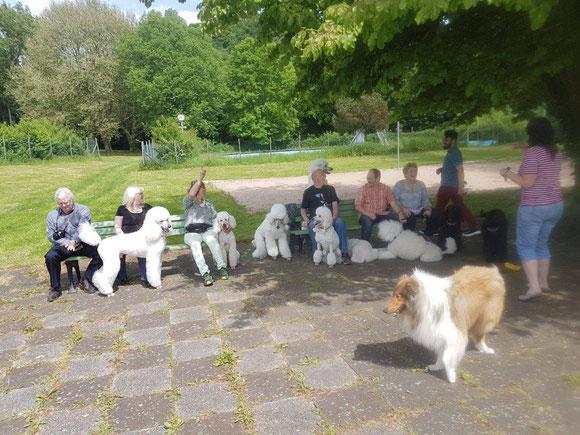 Welpendag in Duitsland met zijn allen bij elkaar in Unkel DTL.  eind mei 2017