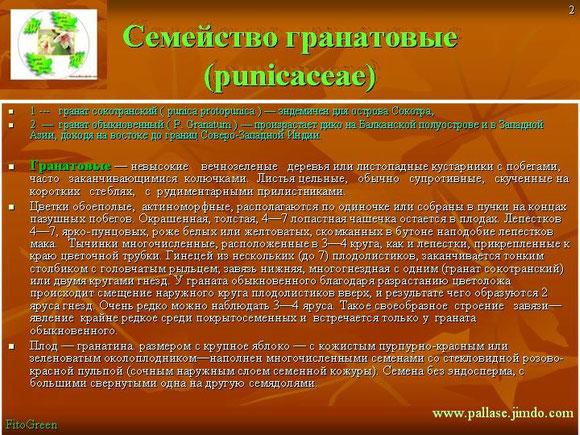 Семейство гранатовые (punicaceae)  1 ---   гранат сокотранский ( punica protopunica ) — эндемичен для острова Сокотра,   2  —  гранат обыкновенный ( Р. Granatum ) — произрастает дико на Балканской п
