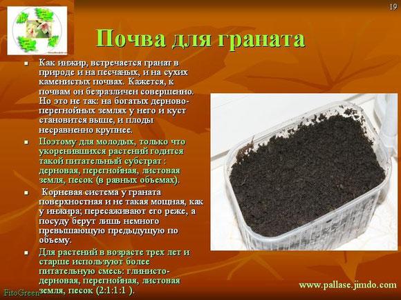 почва для граната карликового