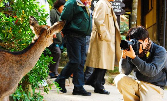 安芸の宮島でニラメッコ Photo By HomiSiratori