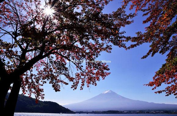 富士山と紅葉 Photo By 三浦俊裕